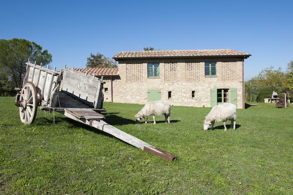 carro con pecore