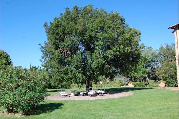 poltrone albero
